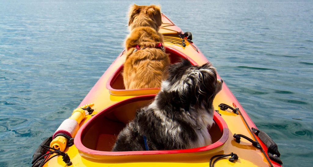 two dogs on a kayak