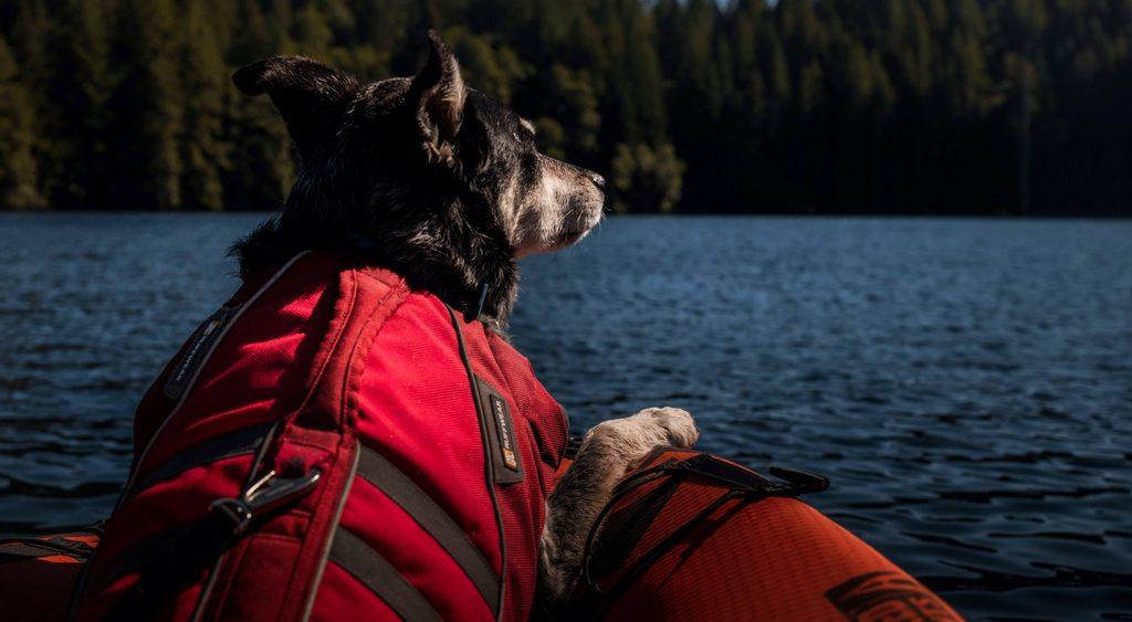 dog on kayak on water