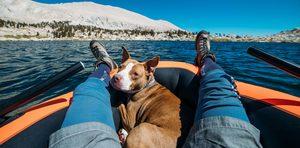 dog on kayak