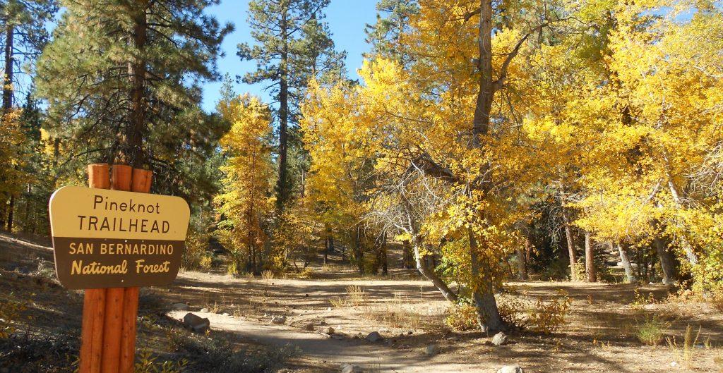 pine knot trail